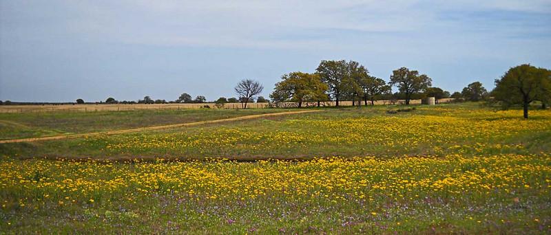 Wildflowers-4-10-edited-218.jpg