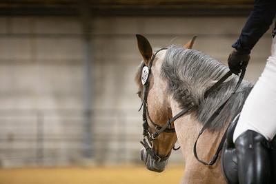 Horse 168