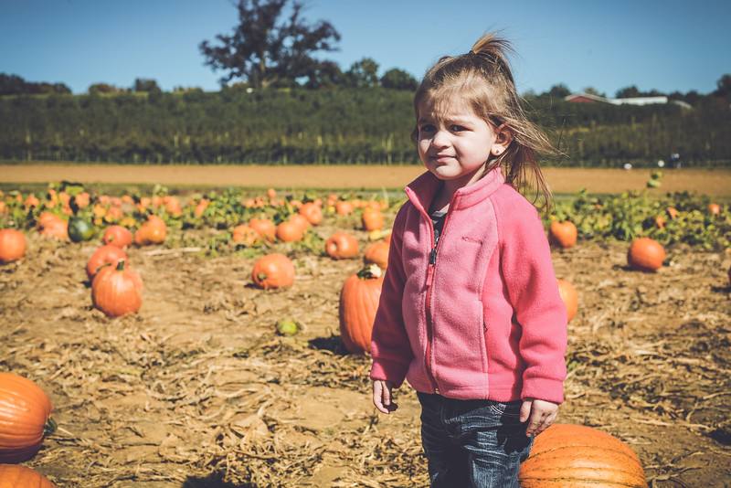 pumpkin picking 10-2016 _IMG_0816.jpg
