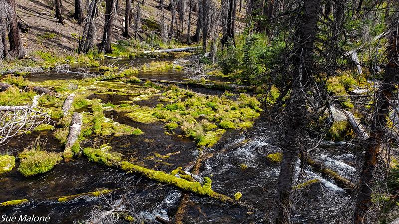 08-18-2020 Boundary Springs Hike-11.jpg