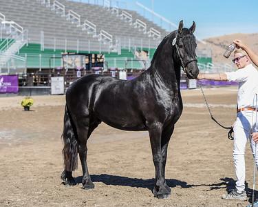 107 Stallion Prospect