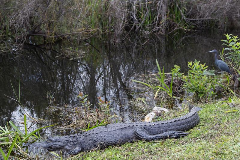 Everglades NP-0352-Select_E.jpg