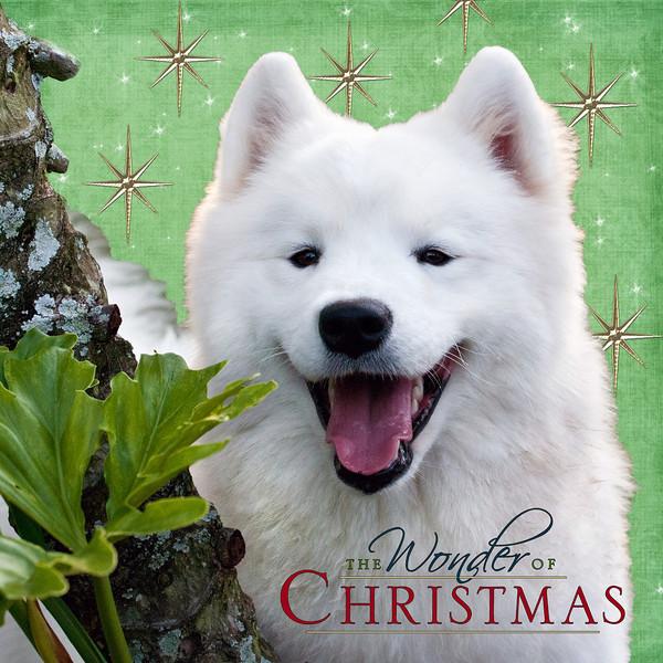 Guinevere-MerryChristmas2.jpg