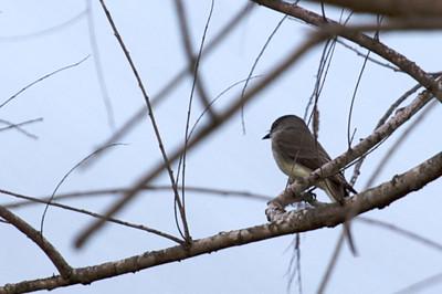 Identify this bird, please