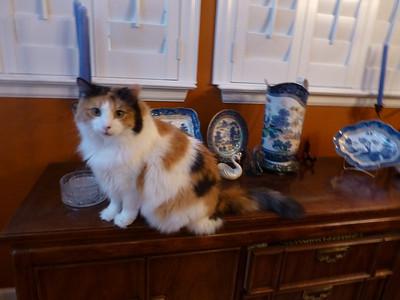 Rikki''s Cats