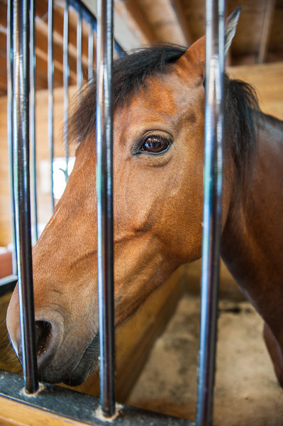 Hidden Acres Therapeutic Riding Center