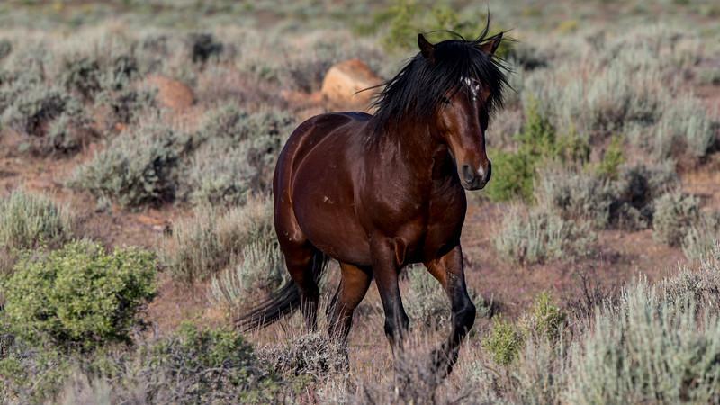 Wild Mustangs 2019-20.jpg