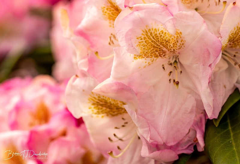 Garden colour-3315.jpg