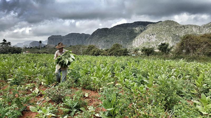Tobacco farm, Viñales Valley