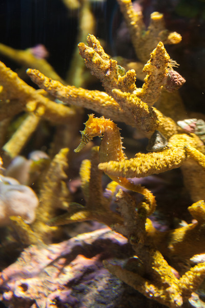 Monterey Bay Aquarium July 2012