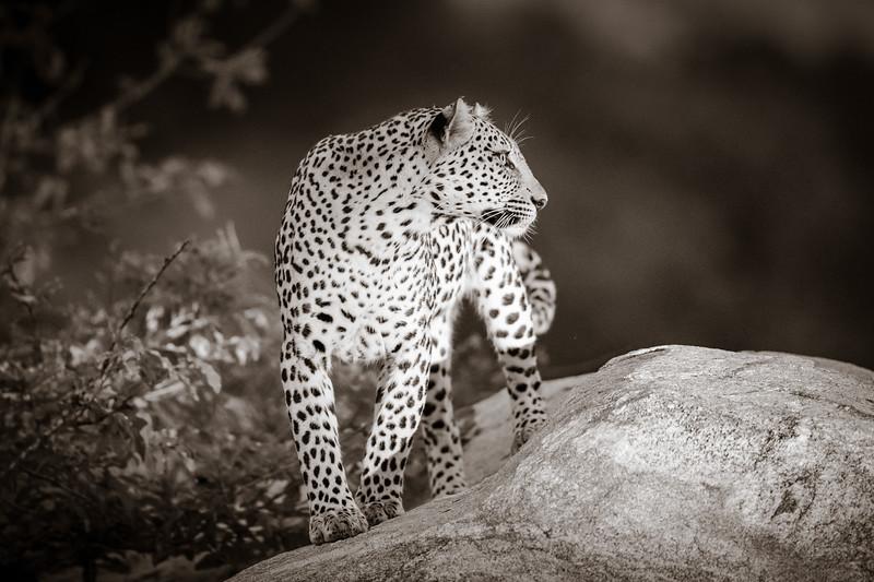 LeopardHills-20191029-2472.jpg