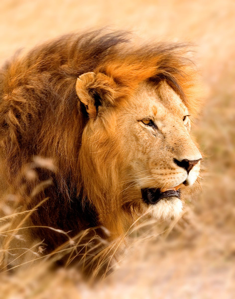 standing lionvertcrpfxdv2bw.jpg