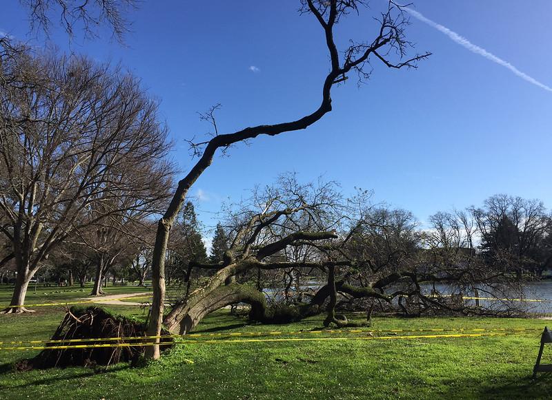 tree down again.jpg