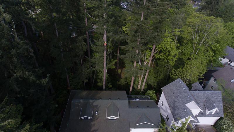 20170504-Tree-Cutting-10.jpg