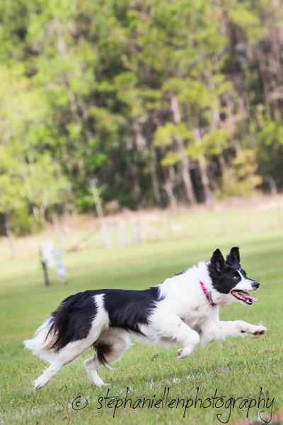 _MG_2762Up_dog_International_2016_StephaniellenPhotography.jpg