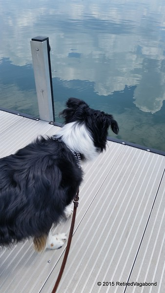 Jagger on the Floating Dock