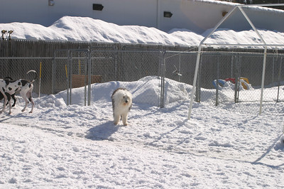 All Dogs Gym 3-1-2011