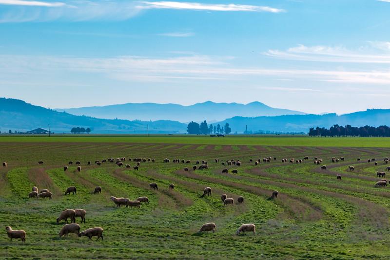 Oregon Sheep Farm