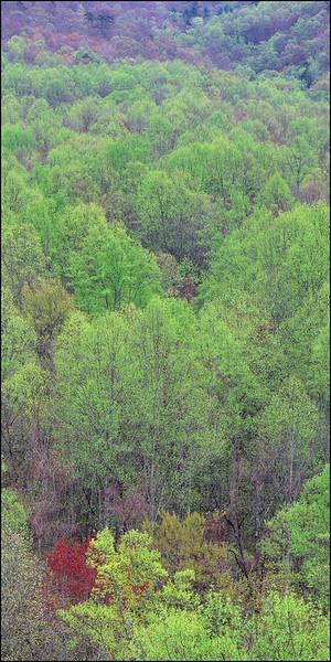 JW RED TREE GREEN FOREST 7 PIX STROKEL.jpg