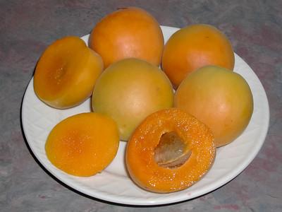 Tilton Apricot - Prunus armeniaca sp.