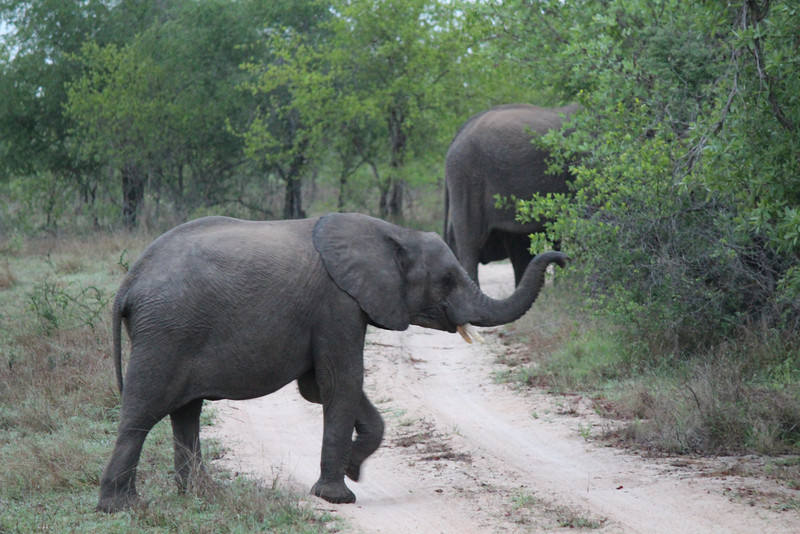 Africa Trip 2012 354.jpg