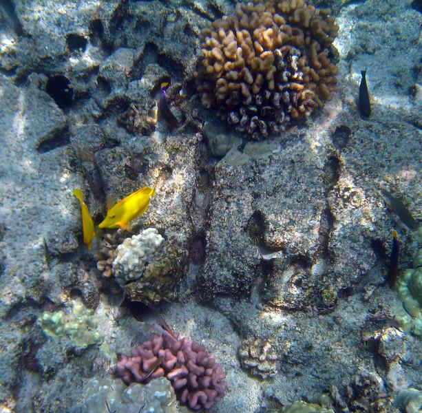 442- 20080416- Hawaii 20-Snorkelling IMG_0614.jpg