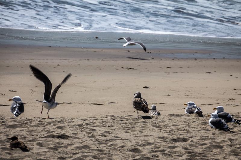 feb 25 - bird picnic.jpg