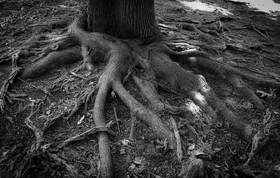 05-10-2021-tree