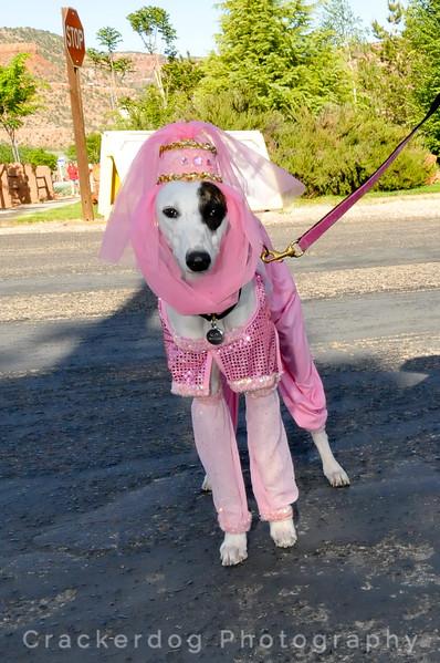 Greyhound Gang Saturday