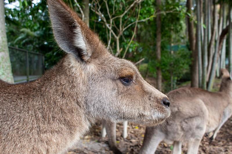 Australia_201.jpg