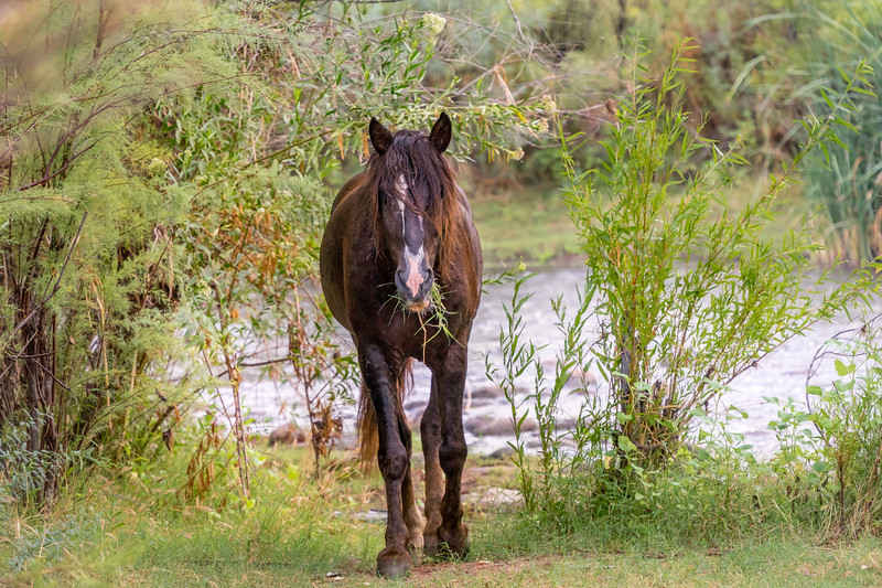 Verde River and Heber Wild Horses