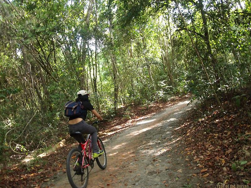 http://www.yearofthedurian.com/2015/08/finding-wild-durians-on-pulau-ubin.html