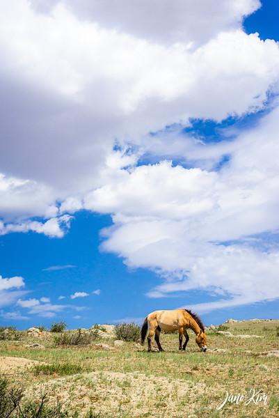 Kustei National Park__6109550-Juno Kim.jpg
