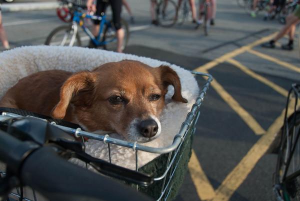 2013-06-01 CPE Dog Agility
