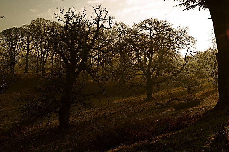 Powis Castle Woodland