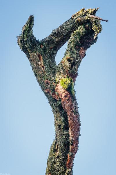 Dead Tree Decorations
