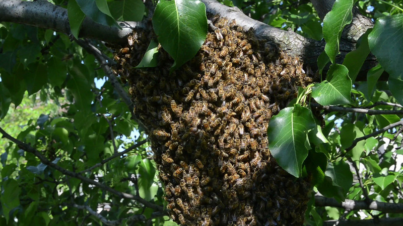 bees_07.mov
