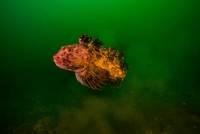 Edmonds Underwater Park 2015-12-20