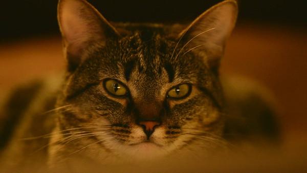 Waverly w/Nikon 300mm f2.8 @ 12'