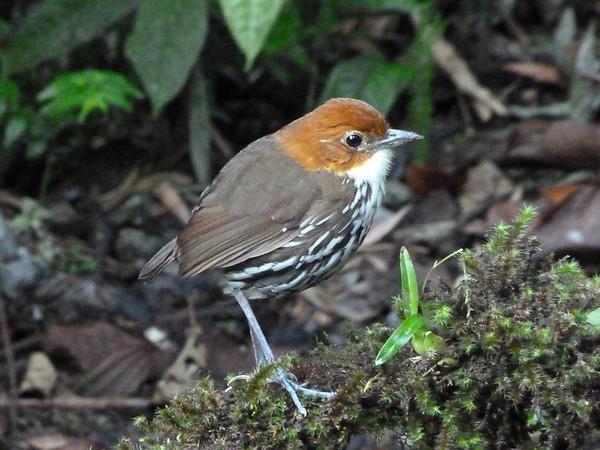 Colombia Birds