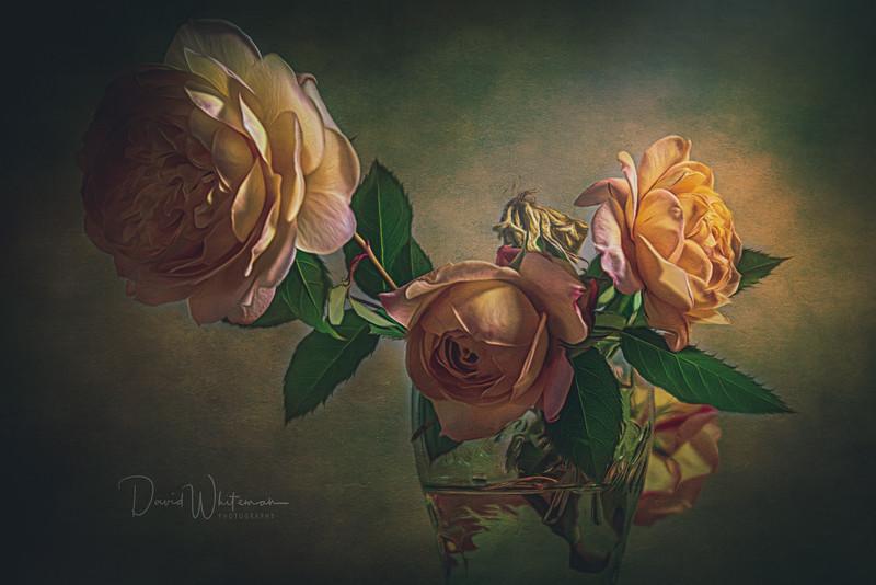 Ivys Roses.jpg