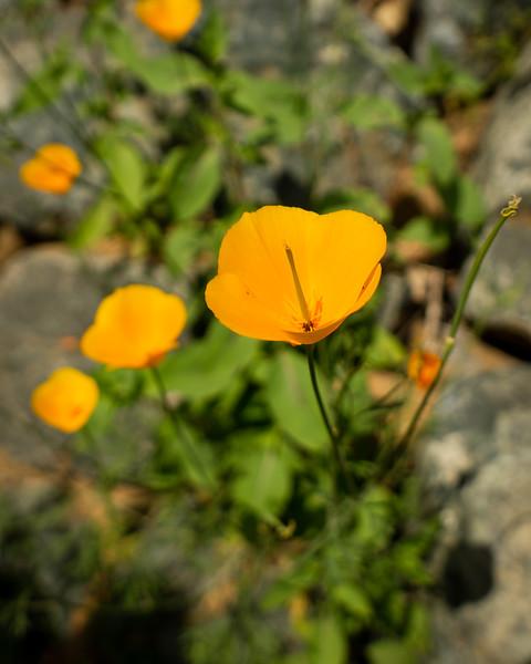 Buttermilk Trail Spring 2020