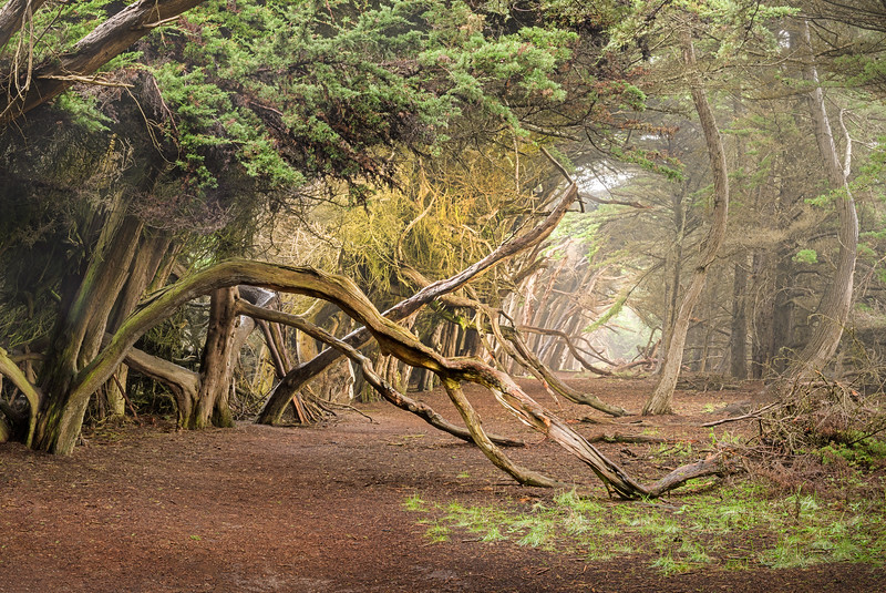 Cypress Journey, Sea Ranch, California