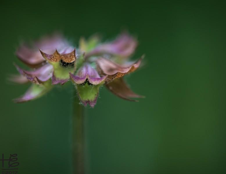Interest grass flower