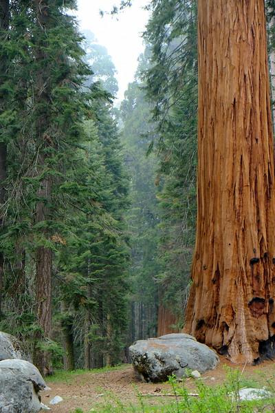 California Day 6 Sequoia 05-30-2017 92.JPG