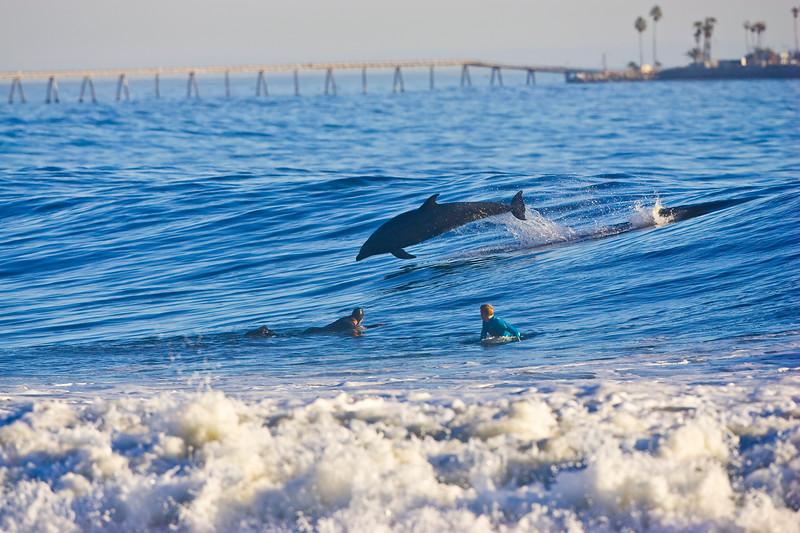 Dolphin at Rincon point copy.jpg