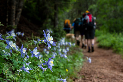 The Columbine is one of my favorite flowers, and we found a lovely bank of them on the trail our last day.  There were many great wildflowers along the way, but this was the best collection of Columbines we found on the whole trip!