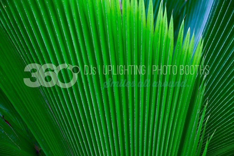 Palm Frond_batch_batch.jpg