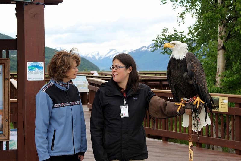 A discussion about eagles