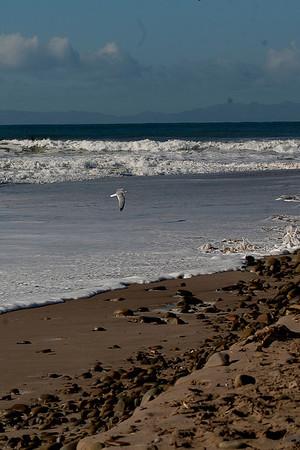 Surf's Up! (Surfer's Pt, Ventura, CA Feb 2011